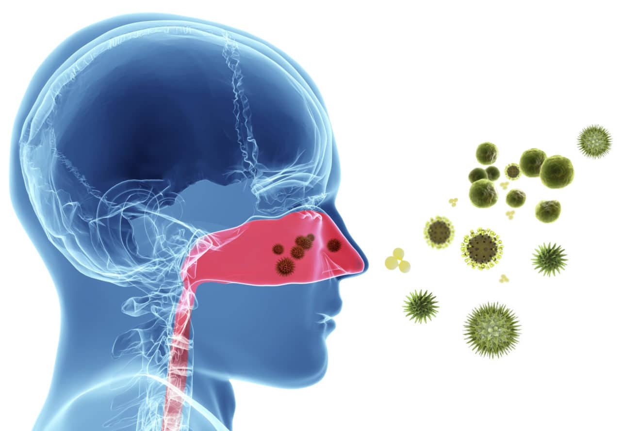 Illustration of a head and neck, with the  contours of the internal organs distinguishable as if everything were made of jelly, facing magnified allergens such as pollen and mold particles. The nasal passage and airway is red, contrasting with the blue of the rest of the face, illustrating the irritation allergens can cause.
