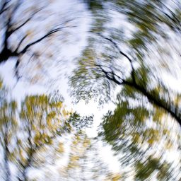 image of trees with a spinning filter