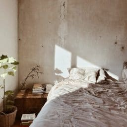 A bed and nightstand with a plant.